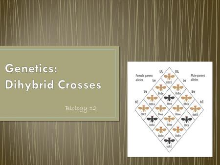 Biology 12. These are crosses that involve genes for two different characteristics.