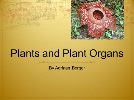 Plants and Plant Organs By Adriaan Berger. What are all the plant organs? One of the main plant organs is the stem. It holds the plant upright. It kind.