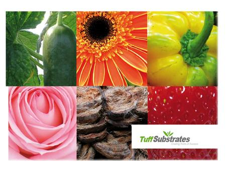 TUFF is the largest growing media manufacturer in Israel, producing and marketing professional substrates and potting soil.