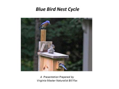Blue Bird Nest Cycle A Presentation Prepared by Virginia Master Naturalist Bill Fox.