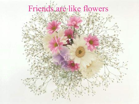 Friends are like flowers. They add color to your life.