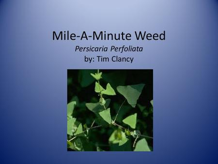 Mile-A-Minute Weed Persicaria Perfoliata by: Tim Clancy.