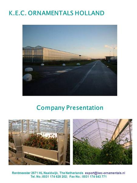 K.E.C. ORNAMENTALS HOLLAND Company Presentation Rentmeester 2671 HL Naaldwijk, The Netherlands. Tel. No.:0031 174 628 202; Fax.