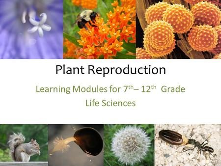 Learning Modules for 7th– 12th Grade Life Sciences