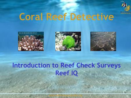 Www.reefcheckaustralia.org Coral Reef Detective Introduction to Reef Check Surveys Reef IQ.