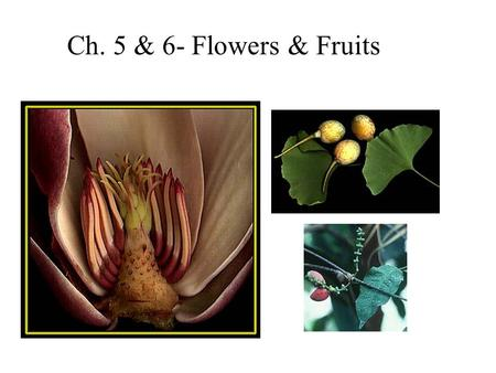 Ch. 5 & 6- Flowers & Fruits.