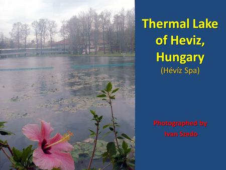 Thermal Lake of Heviz, Hungary (Hévíz Spa) Photographed by Ivan Szedo Ivan Szedo.