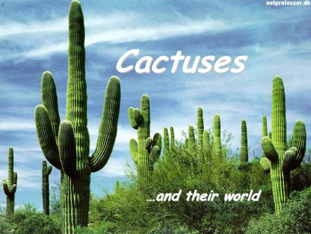 Cactuses …and their world. About cactuses… Cactuses are very popular plants. Their home is hot and dry desert. They are usually green with spines and.