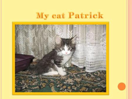 M Y CAT IS CALLED P ATRICK. H E IS VERY FUN. 1 YEAR AGO WE TOOK HIM AND SINCE THIS TIME WE BEGIN LIVE WITH BEAUTIFUL CAT. T HE FIRST TIME IT WAS THE CALM,