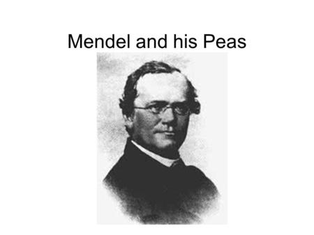 Mendel and his Peas. The passing of traits from parents to offspring.