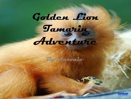 Golden Lion Tamarin Adventure By Antonio. Table of Contents.