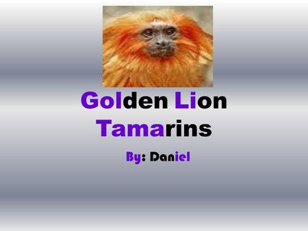 Golden Lion Tamarins By: Daniel. Table of Contents.
