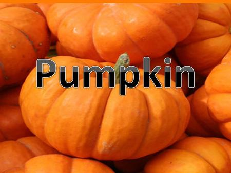 PUMPKIN RHJYH. The pumpkin plant is a rambling vine. They have large, dark green leaves, orange trumpet- shaped flowers, and prickly hairs on the stems.