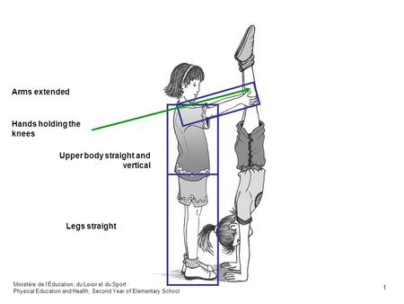 Arms extended Legs straight Upper body straight and vertical Hands holding the knees Ministère de lÉducation, du Loisir et du Sport Physical Education.
