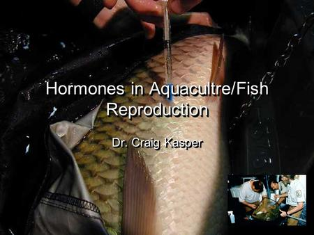 Hormones in Aquacultre/Fish Reproduction Dr. Craig Kasper.