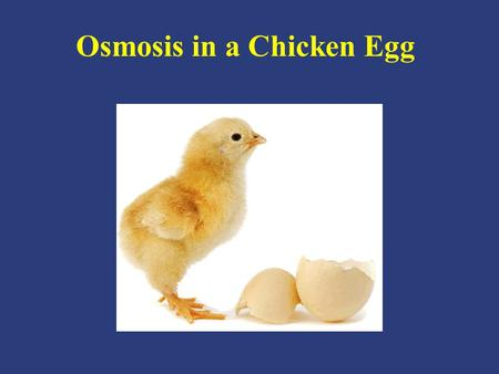 Osmosis in a Chicken Egg. – Movement of molecules from a high concentration to a low concentration – Movement of water molecules from a high concentration.