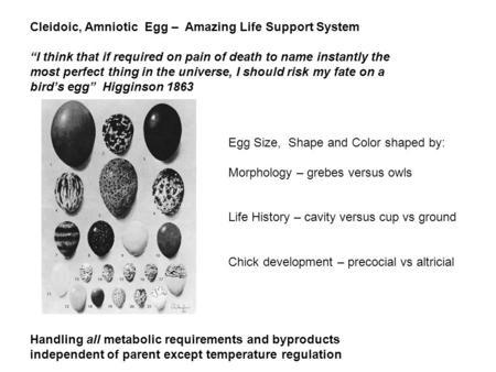 Cleidoic, Amniotic Egg – Amazing Life Support System I think that if required on pain of death to name instantly the most perfect thing in the universe,