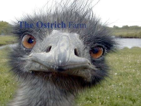 Financial Accounting 1 The Ostrich Farm. Financial Accounting 2 Basic Information commercial ostrich industry began about 150 years ago in South Africa.