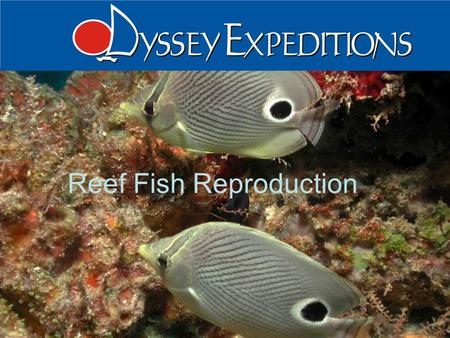 1 Odyssey Expeditions – Fish Reproduction Odyssey Expeditions Reef Fish Reproduction.