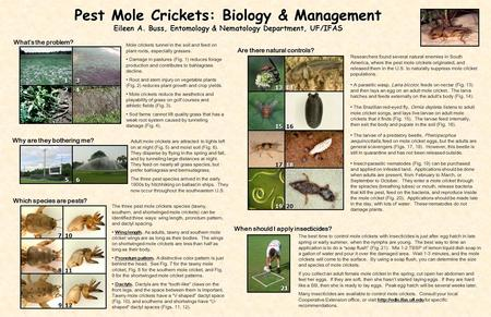 Pest Mole Crickets: Biology & Management Eileen A. Buss, Entomology & Nematology Department, UF/IFAS Whats the problem? Which species are pests? Are there.
