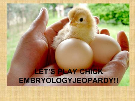 LETS PLAY CHICK EMBRYOLOGYJEOPARDY!! EggsIncubatorCaring for Eggs Baby Chicks Parts of A Chicken Q $100 Q $200 Q $300 Q $400 Q $500 Q $100 Q $200 Q $300.