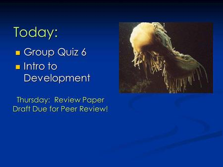 Today: Group Quiz 6 Group Quiz 6 Intro to Development Intro to Development Thursday: Review Paper Draft Due for Peer Review!