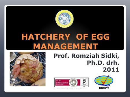 HATCHERY OF EGG MANAGEMENT Prof. Romziah Sidki, Ph.D. drh. 2011.