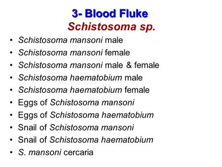 3- Blood Fluke Schistosoma sp.