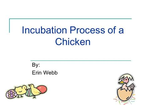 Incubation Process of a Chicken By: Erin Webb. Preparation Stage Chick incubation process is 21 days Gather fertilized eggs 2 – 3 days in advance Set.