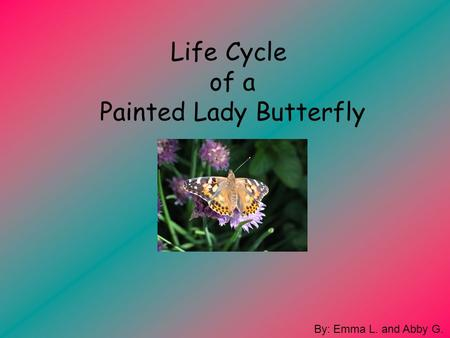 Life Cycle of a Painted Lady Butterfly By: Emma L. and Abby G.