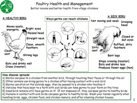 Poultry Health and Management How disease spreads 1) Germs can pass to a chicken from another bird, through touching their feces or through the air 2)