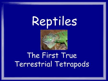 The First True Terrestrial Tetrapods