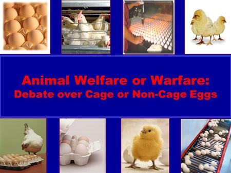 United Egg Producers Animal Welfare or Warfare: Debate over Cage or Non-Cage Eggs.