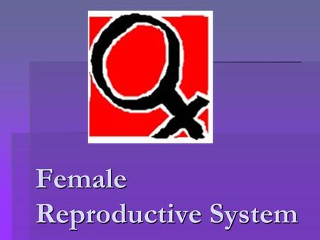 Female Reproductive System. What the Female Reproductive System Does The function of the female reproductive system is to make eggs and to provide a place.