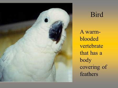 Bird A warm- blooded vertebrate that has a body covering of feathers.