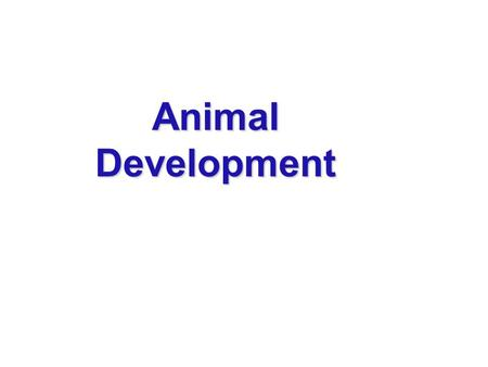 Animal Development. The question of how a zygote becomes an animal has been asked for centuries As recently as the 18th century, the prevailing theory.