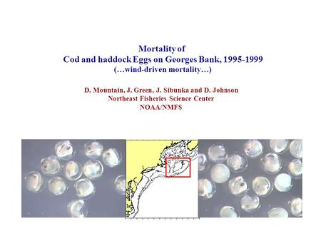 Mortality of Cod and haddock Eggs on Georges Bank, 1995-1999 (…wind-driven mortality…) D. Mountain, J. Green, J. Sibunka and D. Johnson Northeast Fisheries.