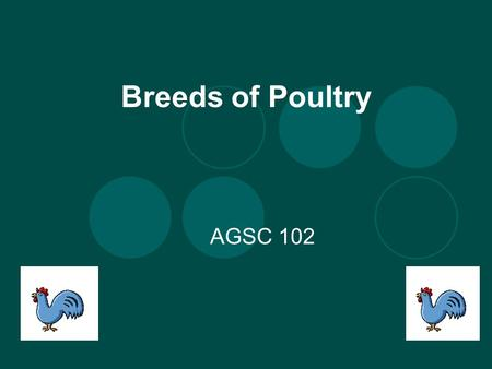 Breeds of Poultry AGSC 102. Who ate breakfast this morning? What did you have? When was the last time you had cake, cookies, or pie? What do all these.