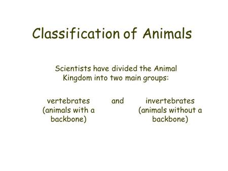 Classification of Animals Scientists have divided the Animal Kingdom into two main groups: vertebrates (animals with a backbone) invertebrates (animals.