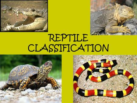 REPTILE CLASSIFICATION. CLASS REPTILIA Members of this class were the first vertebrates to have amniotic eggs. These eggs have extra membranes that.