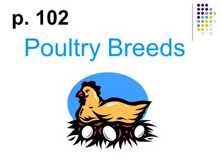 Poultry Breeds p. 102. Why do people raise chickens? Eggs Meat Eggs & Meat Dual purpose breeds Exhibition Enjoyment.