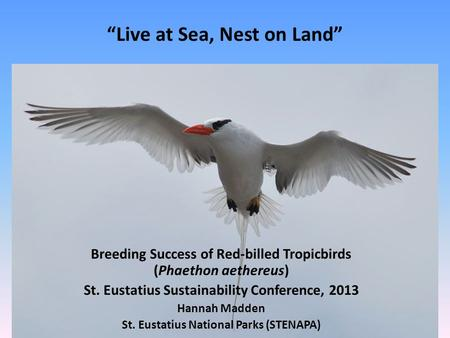 Live at Sea, Nest on Land Breeding Success of Red-billed Tropicbirds (Phaethon aethereus) St. Eustatius Sustainability Conference, 2013 Hannah Madden St.