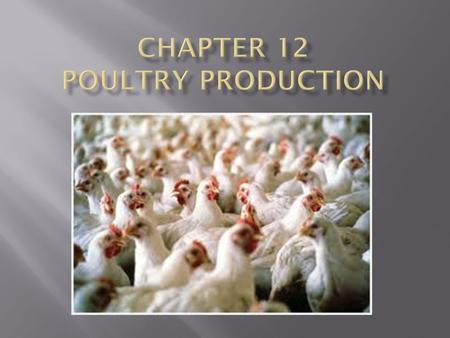 Poultry popular for holidays Chicken most popular Average American eats 75 pounds of poultry per year. Products from poultry: Meat Eggs Medicine and vaccines.