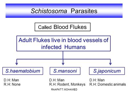 Schistosoma Parasites Adult Flukes live in blood vessels of infected Humans S.haematobiumS.mansoniS.japonicum Called Blood Flukes D.H: Man R.H: Rodent,