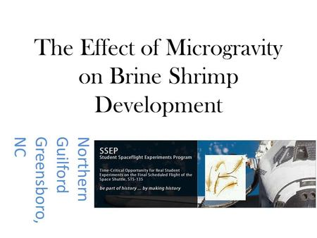 The Effect of Microgravity on Brine Shrimp Development