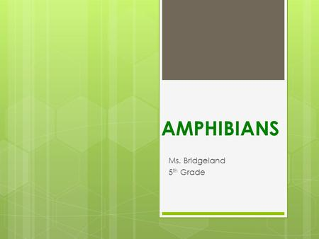 AMPHIBIANS Ms. Bridgeland 5th Grade.