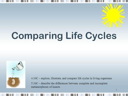 Comparing Life Cycles 4.10C – explore, illustrate, and compare life cycles in living organisms 5.10C – describe the differences between complete and incomplete.