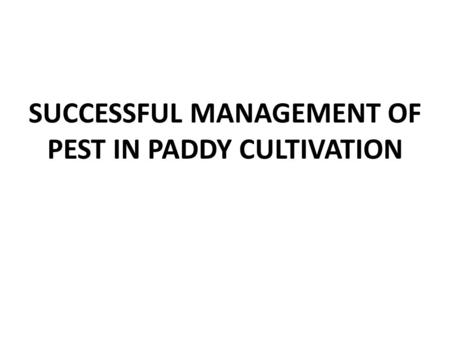 SUCCESSFUL MANAGEMENT OF PEST IN PADDY CULTIVATION
