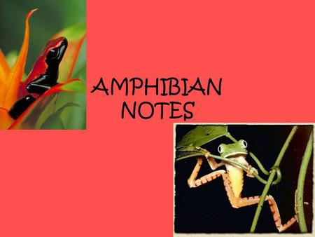 AMPHIBIAN NOTES. EXTERNAL STRUCTURE AND MOVEMENT Amphibian skin does not have scales, feathers, or hair. It does have secretions that help with protection.