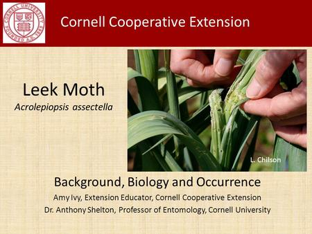 Leek Moth Acrolepiopsis assectella Background, Biology and Occurrence Amy Ivy, Extension Educator, Cornell Cooperative Extension Dr. Anthony Shelton, Professor.